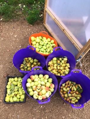 apples & pears 2